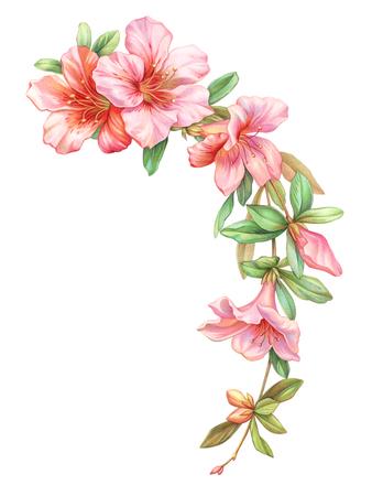 Rosa rosa blanca guirnalda de guirnalda de flores de azalea vintage aisladas sobre fondo blanco. Acuarela coloreó el ejemplo del lápiz. Foto de archivo - 79552035