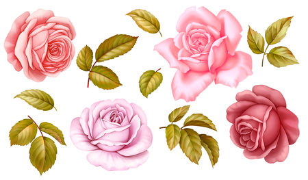 Vector floral set of pink red blue white vintage rose flowers green golden leaves isolated on white background. Digital watercolor illustration.