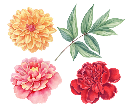 Dahlia and peony. Floral set of pink, red, yellow vintage flowers green leaves  isolated on white background. Watercolor botany illustration. Banque d'images