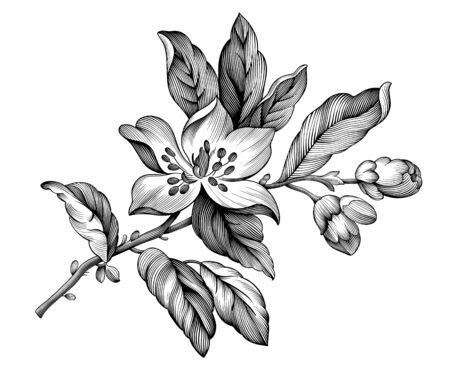 Apple blossom vintage floral spring branch rose sakura cherry flowers. Black and white botanical Victorian illustration. Engraved vector retro pattern botany bloom. Filigree design Baroque tattoo Ilustração