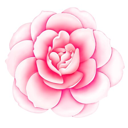 Pink white vintage rose flower isolated on white background. Digital watercolor illustration. Floral botanical drawing. Stok Fotoğraf - 149213399