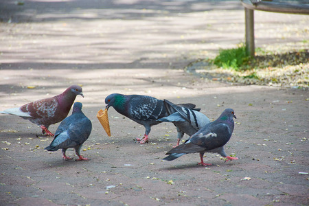 Pigeons argue in the city for an ice cream cone Stock Photo