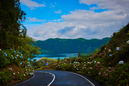 road on the Azores on Sao Miguel with the vegetation of flowers like hydrangeas