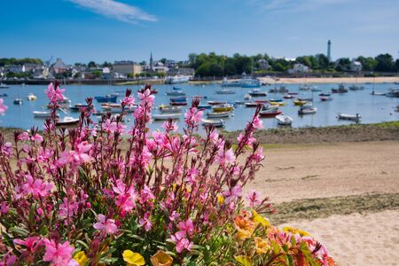 pink flowers in the front focused, in the background is blurred the harbor of Sainte-Marine and Benodet