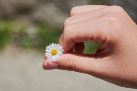 hand of a girl is holding a daisy on a sunny day Stockfoto
