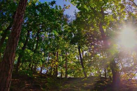 forest color picture with sunbeams shining through the trees, horizontal color picture Stockfoto