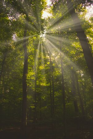 foggy forest with the morning sun shining through the trees. matt style