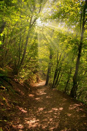 sunbeams are shining through trees in a forest over a path