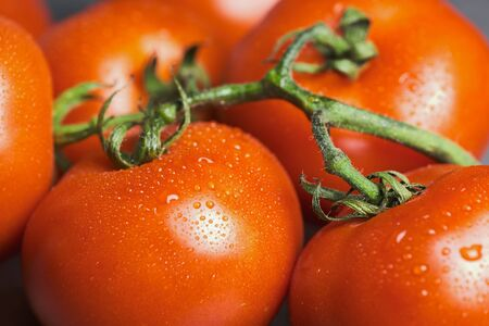 close up of raw vine tomatoes with water drops