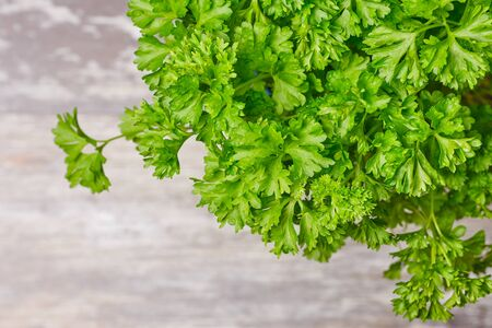 macro of fresh parsley, top view with copy space Stockfoto
