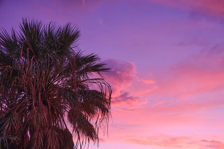 palm tree in front of sunset colored sky with copy space