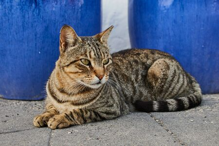 tabby cat lying outdoors on the ground Imagens