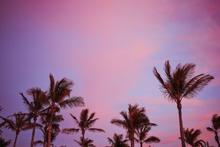 beautiful violet sunset sky with palm trees in Lanzarote, horizontal color photo with copy space