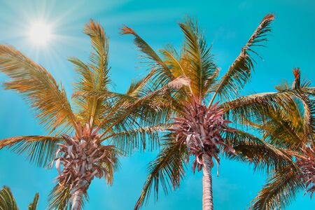 palm trees in Spain against the sky, in the left corner the bright sun with sun rays, mint green color style Stock Photo