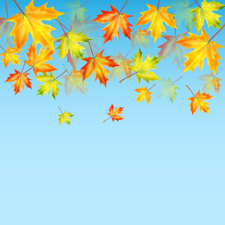 autumn maple leaves on a blue background.autumn background.vector Illustration