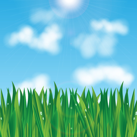 natural background.eco background.green grass with dew drops on a background of blue sky.vector
