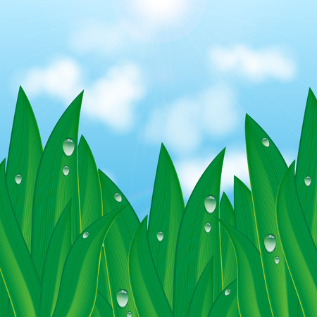 green grass with dew drops on a background of blue sky and clouds.natural background.summer and spring design.vector Illustration