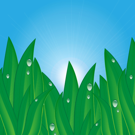 sunup: green grass with dew drops on a background of blue sky .natural background.summer and spring design.vector