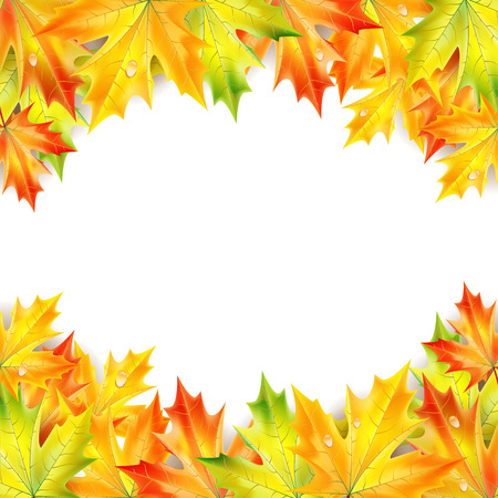 Autumn maple leaves on a white background Illustration