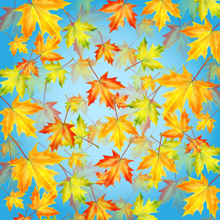 Autumn maple leaves on background blue sky