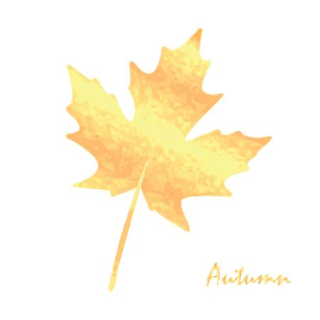 Golden autumn maple leaf.Autumn leaf, isolated on white background.Maple leaf.Autumn leaf design elements
