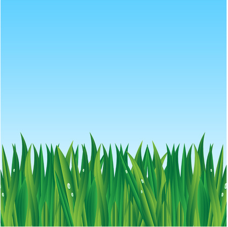 morning dew: green grass on a background blue sky