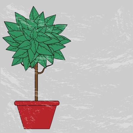 glade: tree with green leaves in a red clay pot on a gray background