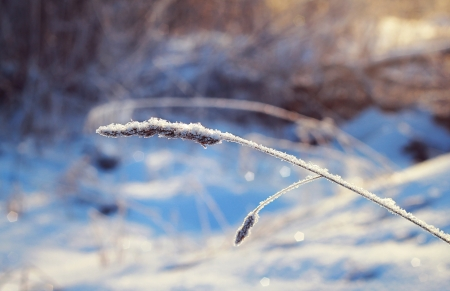 dry grass under the snow in the field with bokeh photo