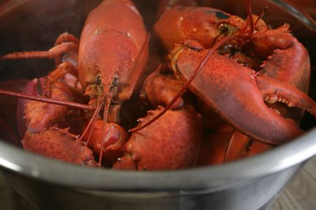 lobster pot: A pot of boiled lobster from Nova Scotia.