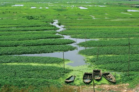 Four old wooden boats sunken at the edge of a flooded crop field in Cambodia. Stock Photo