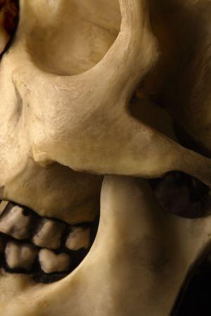 jawbone: Abstract image of a human skull.