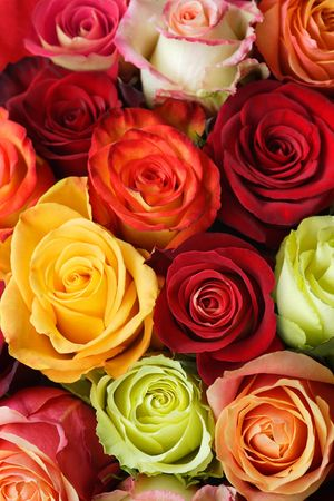 A bouquet of multi-coloured roses. Focus on middle roses. photo