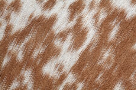 Macro photo of real brown and white cowhide. photo