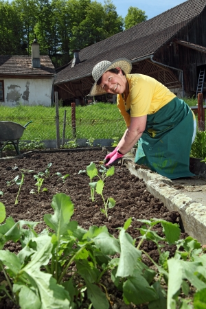 Photo of a grandmother planting vegetable seedlings into her garden. photo