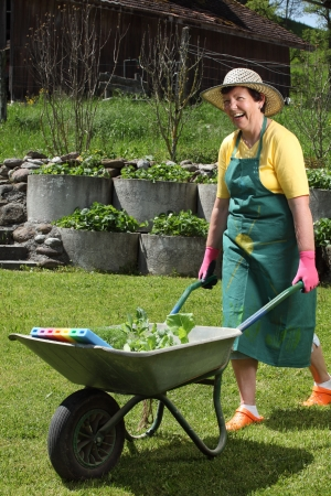 Retired woman in her 60s moving her new plants to her garden with a wheelbarrow. photo