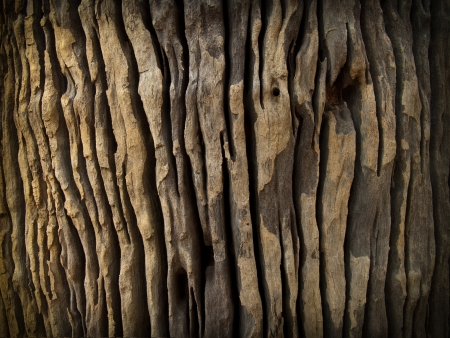 Close up of dead tree trunk photo