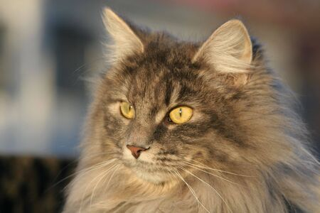 slits: a closeup of a hairy cat
