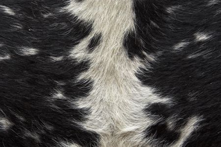 Closeup of the pattern on the hide of a black and white cow Stock Photo