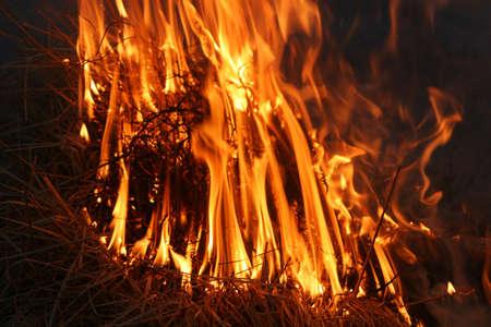 suffocating: cespugli selvatici a fuoco infuria fuori controllo, simmetria in fiamme