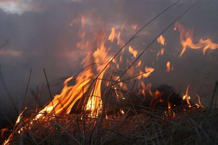 suffocating: cespugli selvatici sul fuoco infuria fuori controllo, con cielo in background