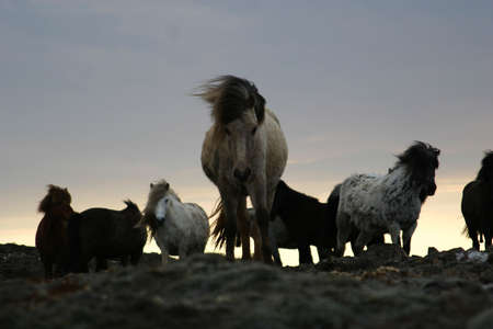 pack of horses on a ridge, curious horse coming towards camera