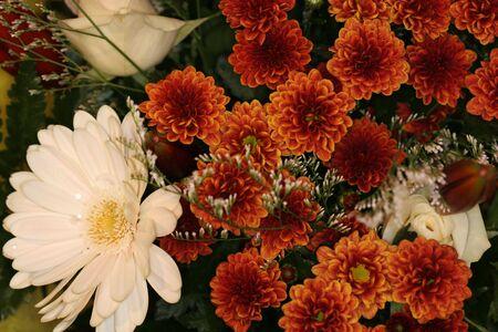 blumen: flower arrangement, dark feel about it