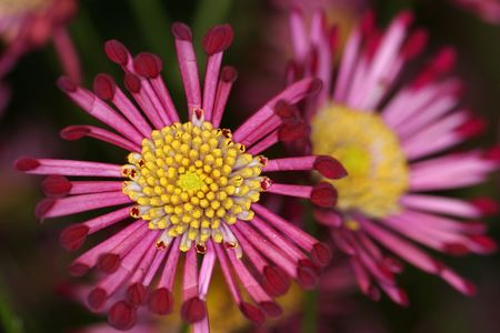 blumen: A tight macro shot of a pink flower with interesting lines
