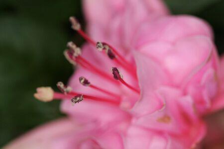 blumen: A tight macro shot of a pink flower
