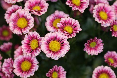 blumen: A tight macro shot of a pink flower arrangement