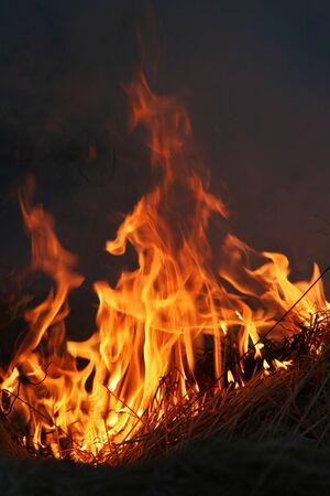 suffocating: cespugli selvatici a fuoco infuria fuori controllo
