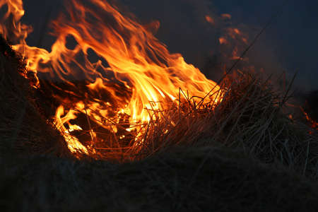 suffocating: wild bushes on fire raging out of control