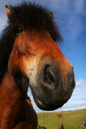 extreme closeup of a horse, focus on eyes Stock Photo