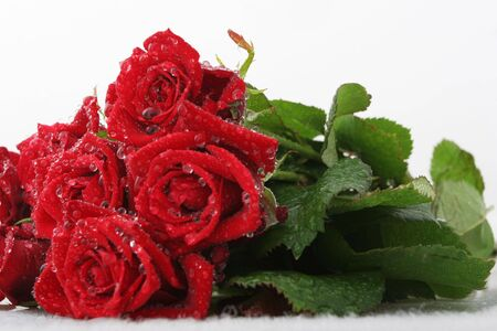 Red roses on white with dew drops Stock Photo - 2166120