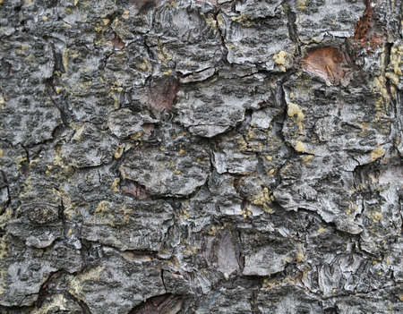 macroshot: macroshot of a tree bark, perfect for backgrounds